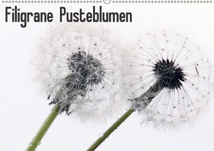 Filigrane Pusteblumen / Geburtstagskalender (Wandkalender 2017 DIN A2 quer) - Coverbild