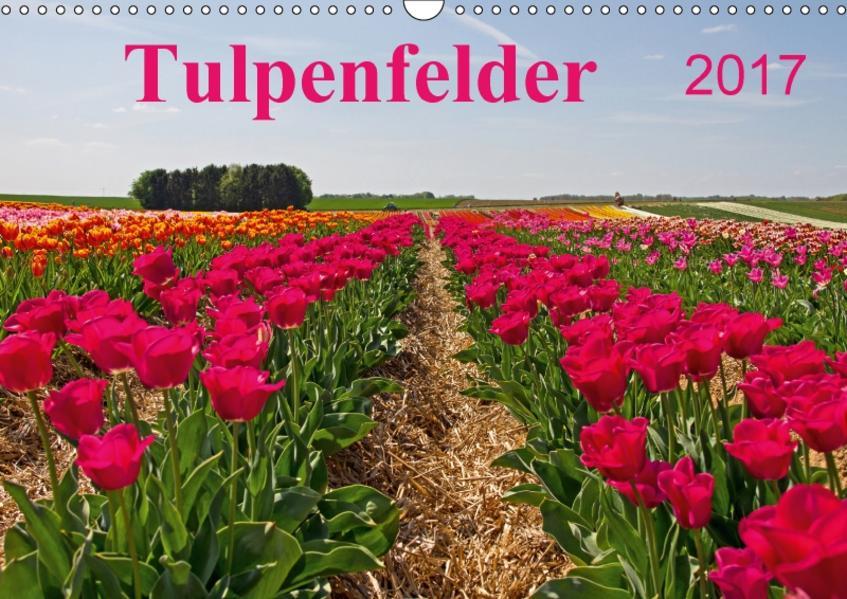 Tulpenfelder 2017 (Wandkalender 2017 DIN A3 quer) - Coverbild