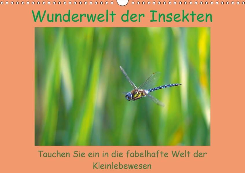 Wunderwelt der Insekten (Wandkalender 2017 DIN A3 quer) - Coverbild