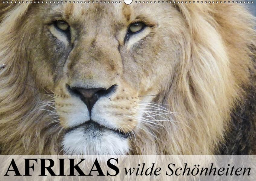 Afrikas wilde Schönheiten (Wandkalender 2017 DIN A2 quer) - Coverbild