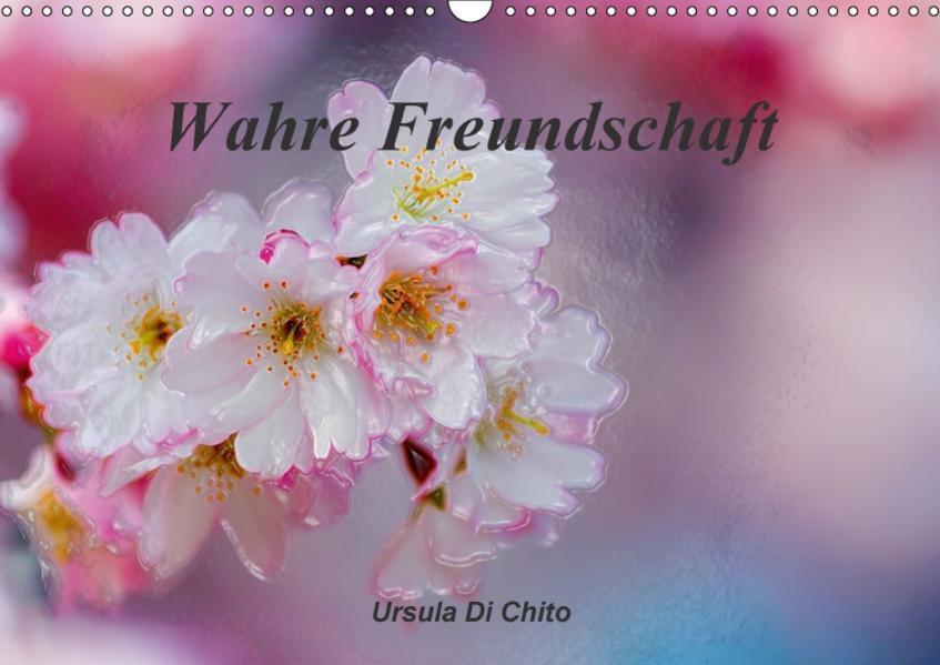 Wahre Freundschaft / AT-Version (Wandkalender 2017 DIN A3 quer) - Coverbild
