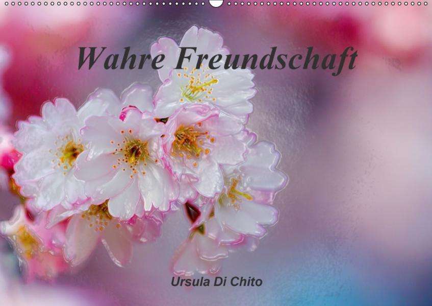 Wahre Freundschaft / AT-Version (Wandkalender 2017 DIN A2 quer) - Coverbild