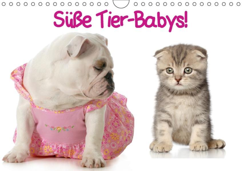Süße Tier-Babys! (Wandkalender 2017 DIN A4 quer) - Coverbild