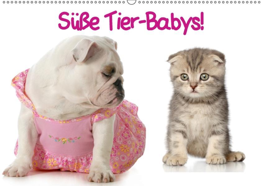 Süße Tier-Babys! (Wandkalender 2017 DIN A2 quer) - Coverbild