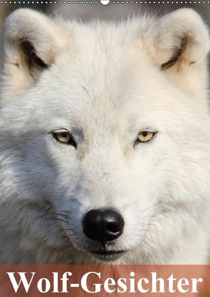Wolf-Gesichter (Wandkalender 2017 DIN A2 hoch) - Coverbild