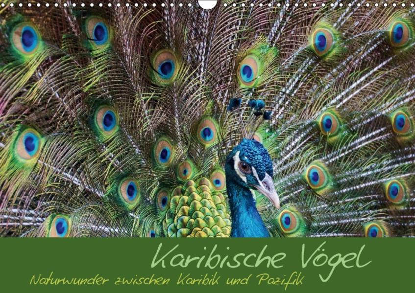 Karibische Vögel - Naturwunder zwischen Karibik und Pazifik (Wandkalender 2017 DIN A3 quer) - Coverbild