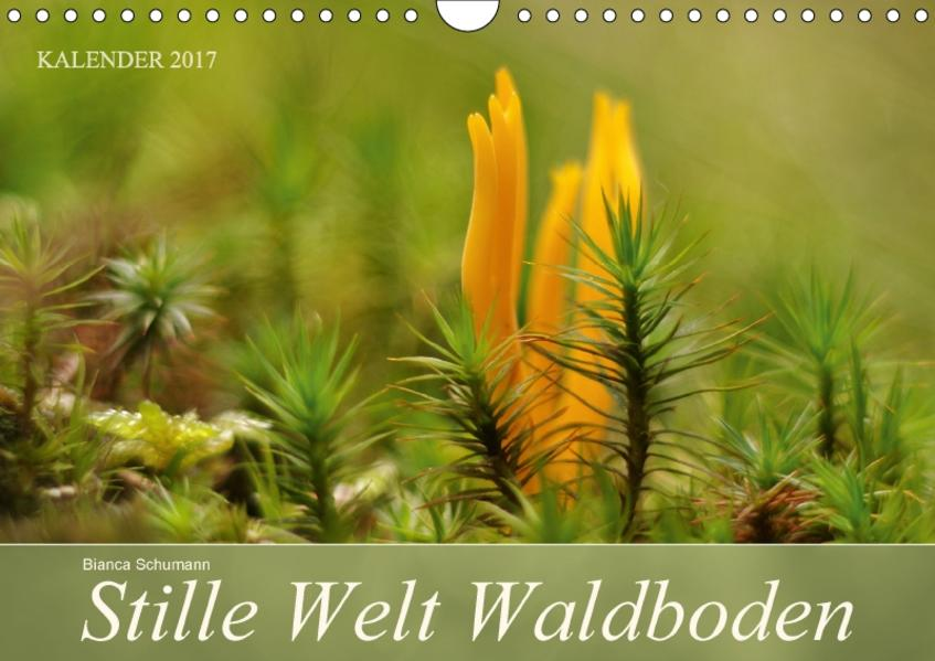 Stille Welt WaldbodenCH-Version  (Wandkalender 2017 DIN A4 quer) - Coverbild