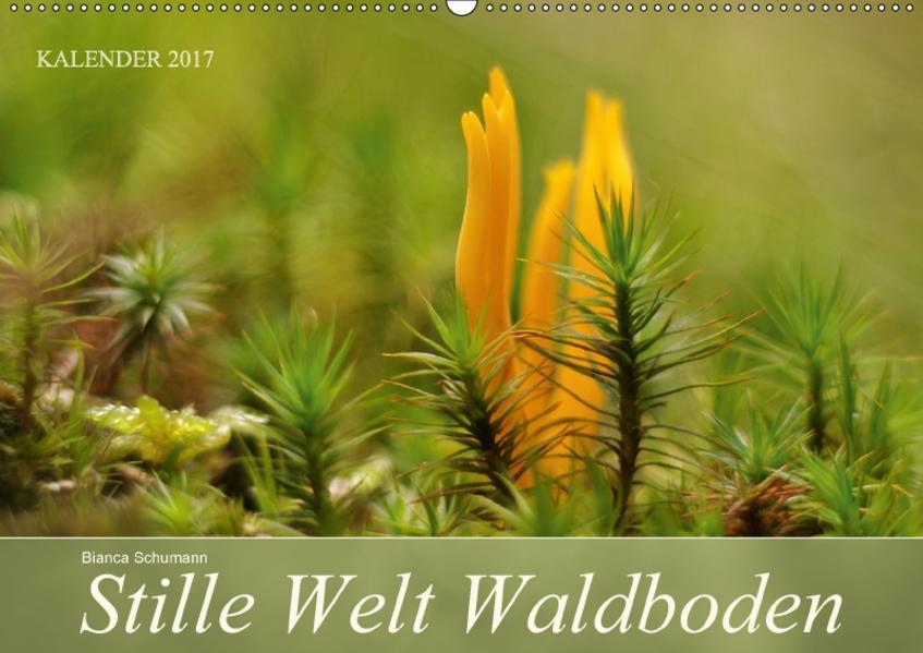 Stille Welt WaldbodenCH-Version  (Wandkalender 2017 DIN A2 quer) - Coverbild