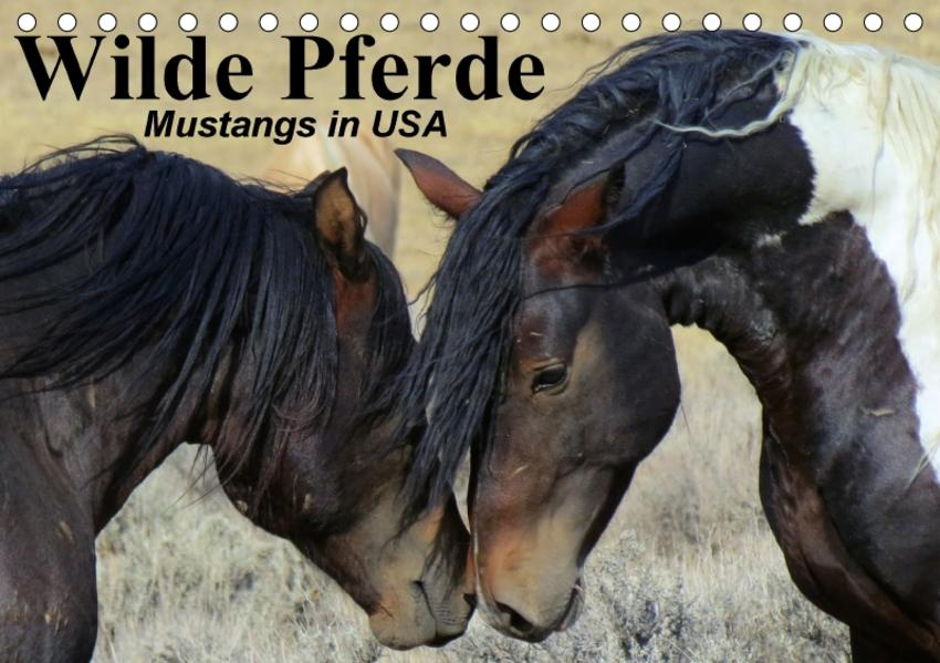 Wilde Pferde • Mustangs in USA (Tischkalender 2017 DIN A5 quer) - Coverbild
