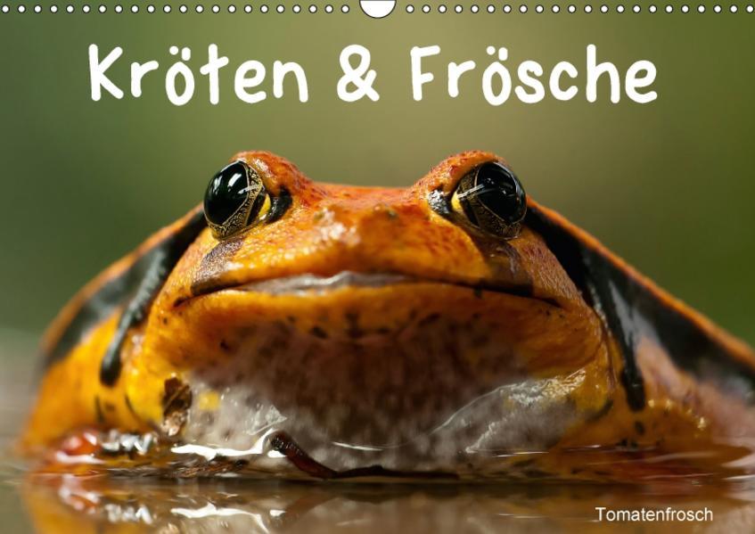 Kröten & Frösche (Wandkalender 2017 DIN A3 quer) - Coverbild