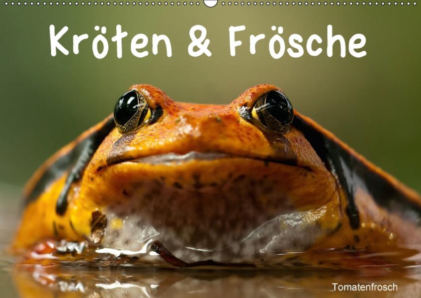 Kröten & Frösche (Wandkalender 2017 DIN A2 quer) - Coverbild