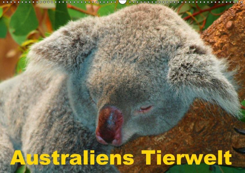 Australiens Tierwelt (Wandkalender 2017 DIN A2 quer) - Coverbild