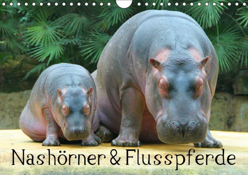 Nashörner & Flusspferde (Wandkalender 2017 DIN A4 quer) - Coverbild