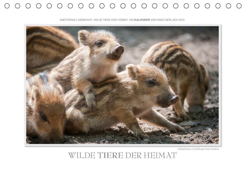 Emotionale Momente: Wilde Tiere der Heimat. / CH-Version (Tischkalender 2017 DIN A5 quer) - Coverbild