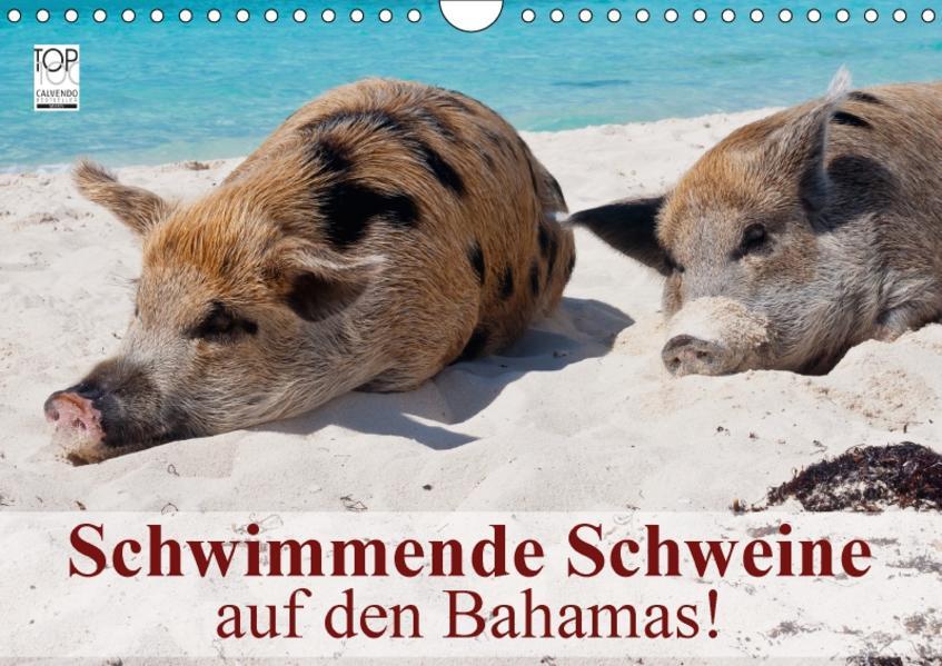 Schwimmende Schweine auf den Bahamas! (Wandkalender 2017 DIN A4 quer) - Coverbild