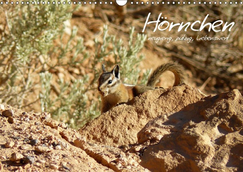 Hörnchen - neugierig, putzig, liebenswert (Wandkalender 2017 DIN A3 quer) - Coverbild