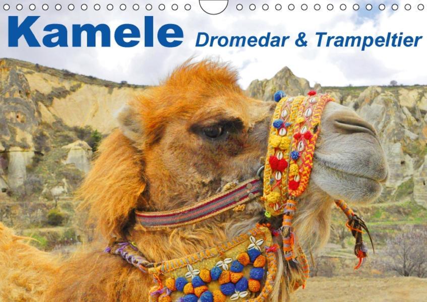 Kamele • Dromedar & Trampeltier (Wandkalender 2017 DIN A4 quer) - Coverbild