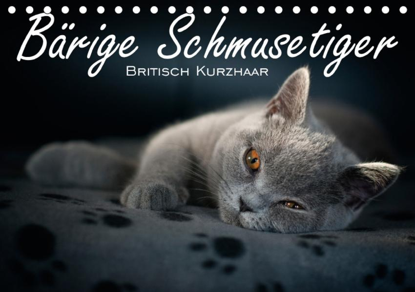 Bärige Schmusetiger - Britisch Kurzhaar / CH-Version (Tischkalender 2017 DIN A5 quer) - Coverbild