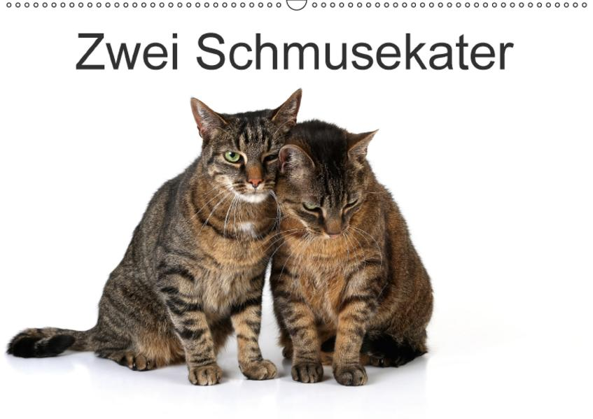 Zwei Schmusekater / CH-Version (Wandkalender 2017 DIN A2 quer) - Coverbild