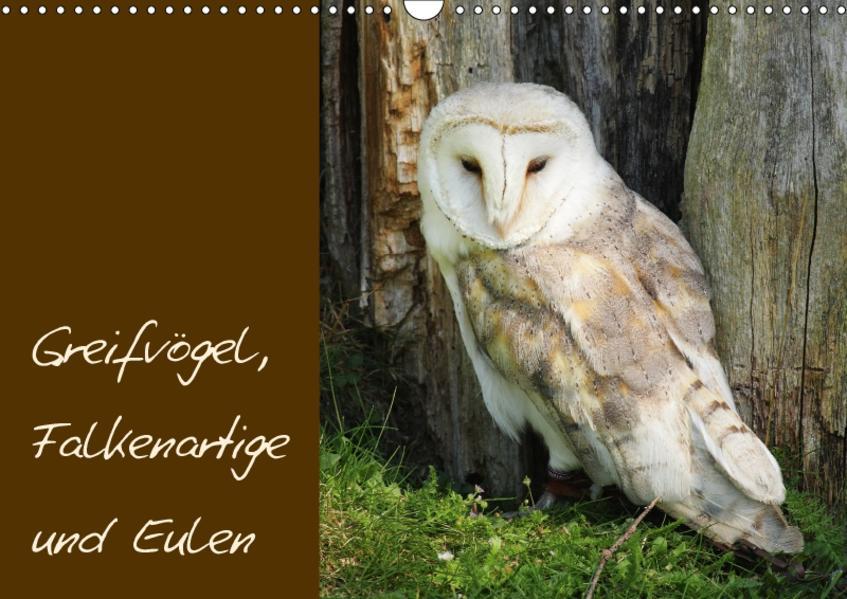 Greifvögel, Falkenartige und Eulen / CH-Version (Wandkalender 2017 DIN A3 quer) - Coverbild