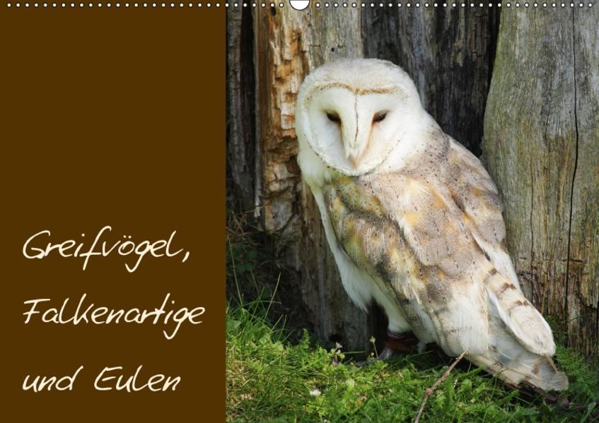 Greifvögel, Falkenartige und Eulen / CH-Version (Wandkalender 2017 DIN A2 quer) - Coverbild