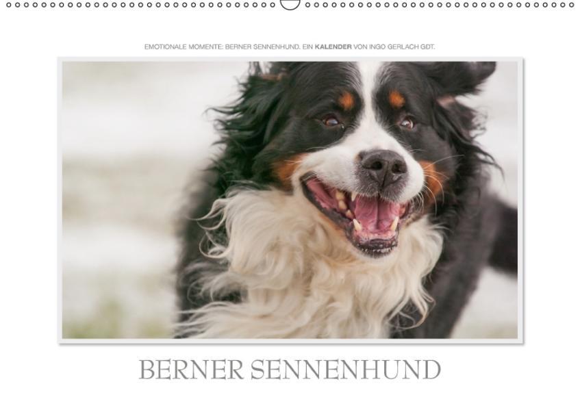 Emotionale Momente: Berner Sennenhund. / CH-Version (Wandkalender 2017 DIN A2 quer) - Coverbild