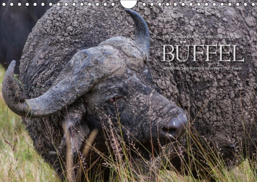 Emotionale Momente: Büffel / CH-Version (Wandkalender 2017 DIN A4 quer) - Coverbild