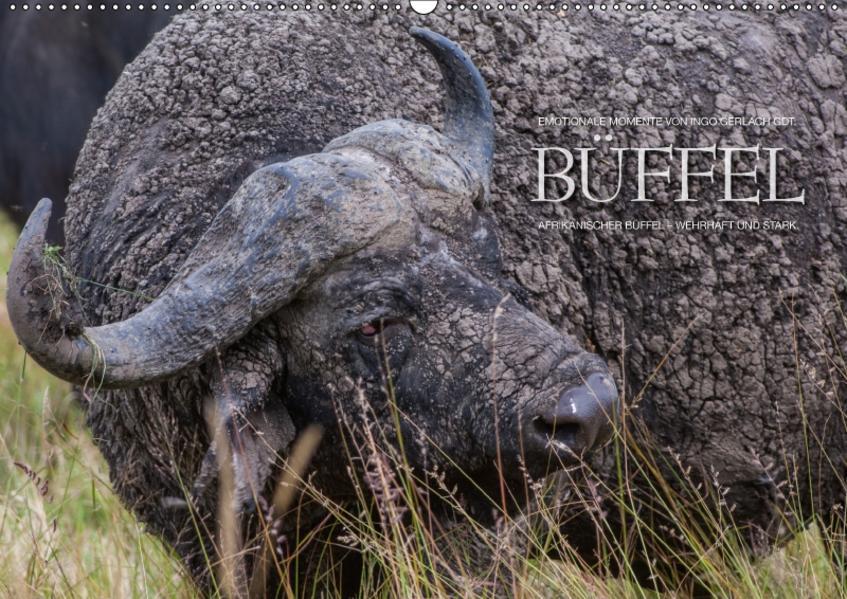 Emotionale Momente: Büffel / CH-Version (Wandkalender 2017 DIN A2 quer) - Coverbild