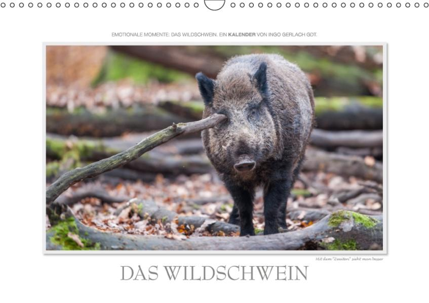 Emotionale Momente: Das Wildschwein. / CH-Version (Wandkalender 2017 DIN A3 quer) - Coverbild