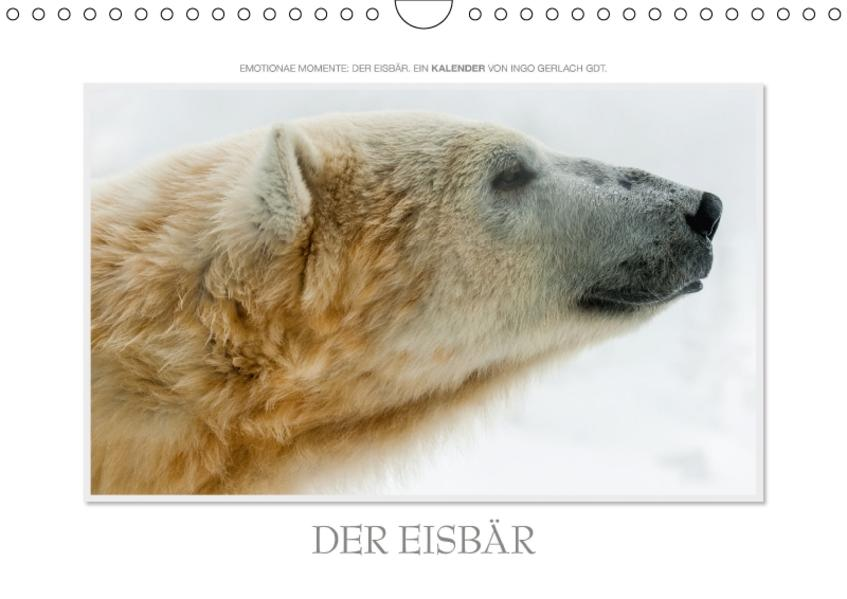 Emotionale Momente: Der Eisbär. / CH-Version (Wandkalender 2017 DIN A4 quer) - Coverbild