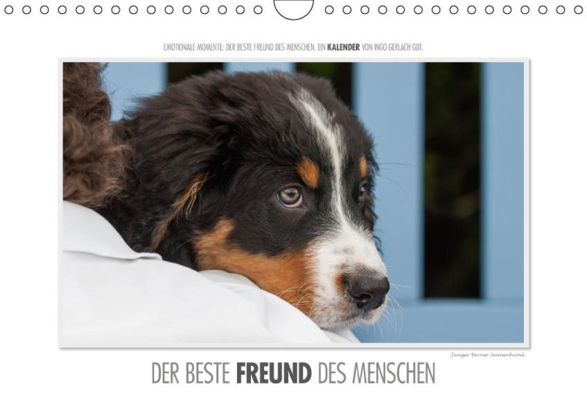 Emotionale Momente: Der beste Freund des Menschen. / CH-Version (Wandkalender 2017 DIN A4 quer) - Coverbild