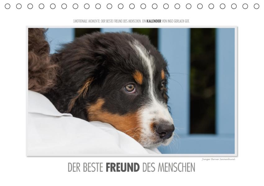 Emotionale Momente: Der beste Freund des Menschen. / CH-Version (Tischkalender 2017 DIN A5 quer) - Coverbild