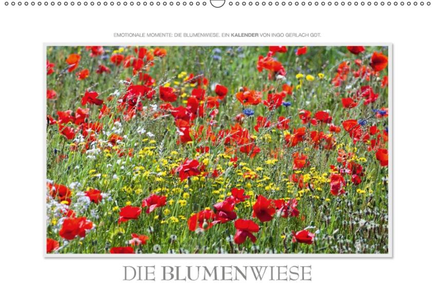 Emotionale Momente: Die Blumenwiese. / CH-Version (Wandkalender 2017 DIN A2 quer) - Coverbild