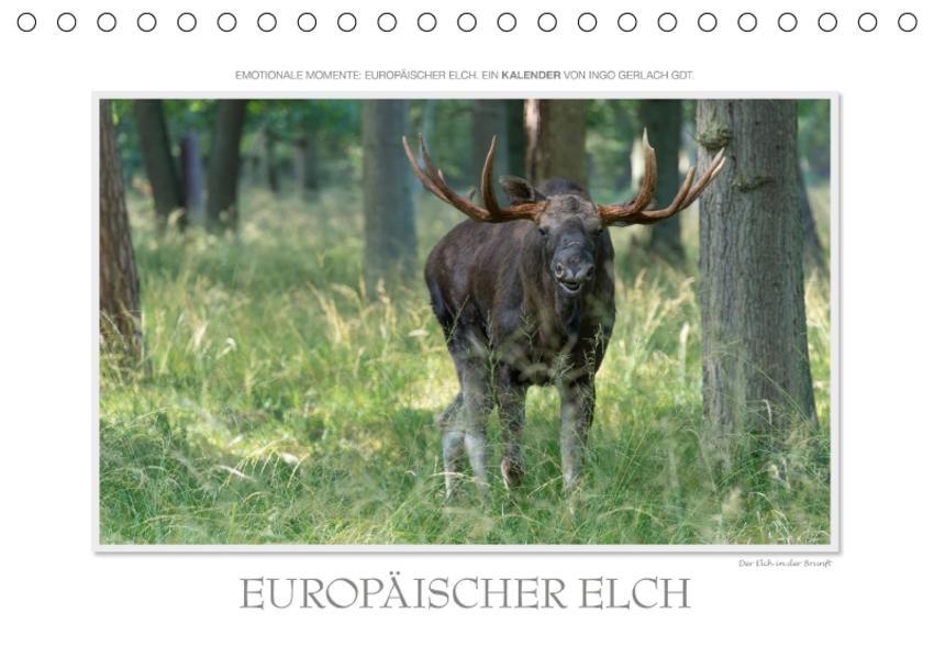 Emotionale Momente: Europäischer Elch. / CH-Version (Tischkalender 2017 DIN A5 quer) - Coverbild