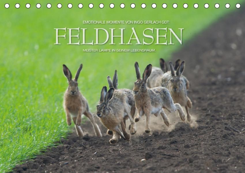 Emotionale Momente: Feldhasen / CH-Version (Tischkalender 2017 DIN A5 quer) - Coverbild