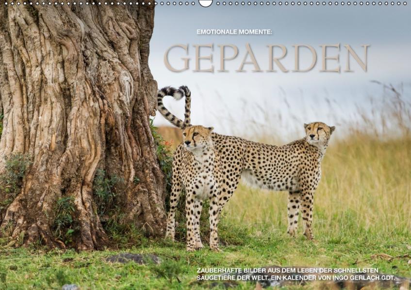 Emotionale Momente: Geparden / CH-Version (Wandkalender 2017 DIN A2 quer) - Coverbild