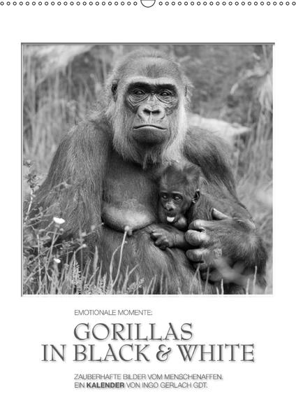 Emotionale Momente: Gorillas in black & white / CH-Version (Wandkalender 2017 DIN A2 hoch) - Coverbild