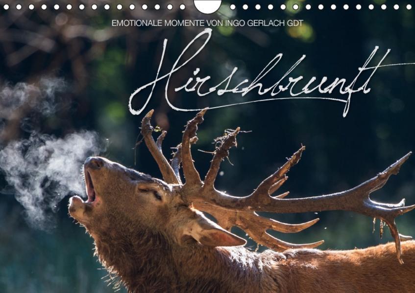 Emotionale Momente: Hirschbrunft / CH-Version (Wandkalender 2017 DIN A4 quer) - Coverbild