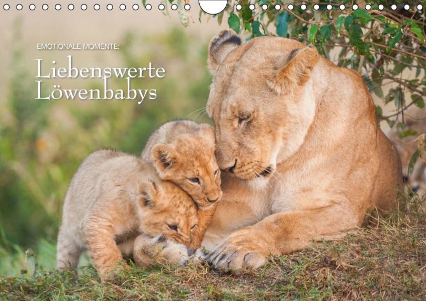 Emotionale Momente: Liebenswerte Löwenbabys / CH-Version (Wandkalender 2017 DIN A4 quer) - Coverbild
