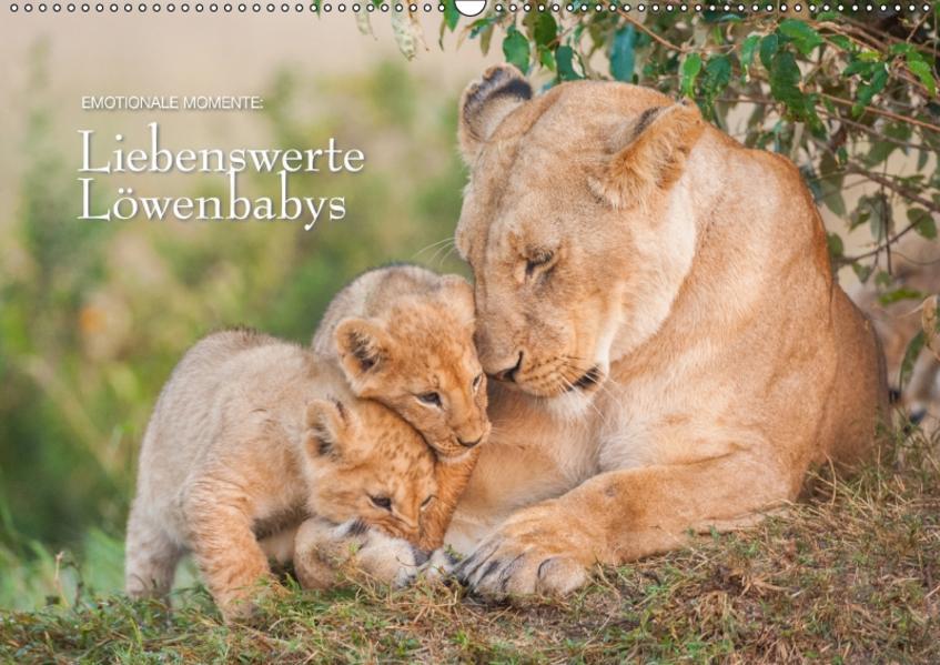 Emotionale Momente: Liebenswerte Löwenbabys / CH-Version (Wandkalender 2017 DIN A2 quer) - Coverbild