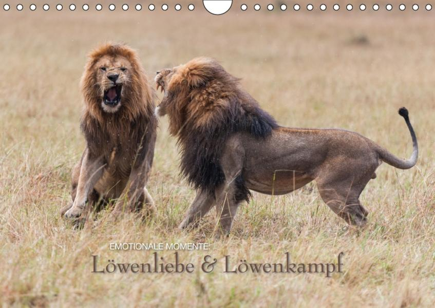 Emotionale Momente: Löwenkampf & Löwenliebe / CH-Version (Wandkalender 2017 DIN A4 quer) - Coverbild