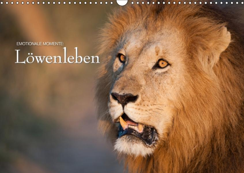 Emotionale Momente: Löwenleben / CH-Version (Wandkalender 2017 DIN A3 quer) - Coverbild