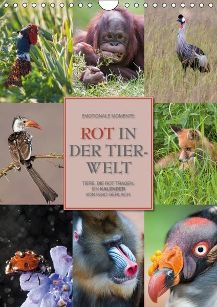 Emotionale Momente: Rot in der Tierwelt / CH-Version (Wandkalender 2017 DIN A4 hoch) - Coverbild