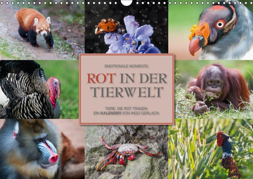 Emotionale Momente: Rot in der Tierwelt / CH-Version (Wandkalender 2017 DIN A3 quer) - Coverbild