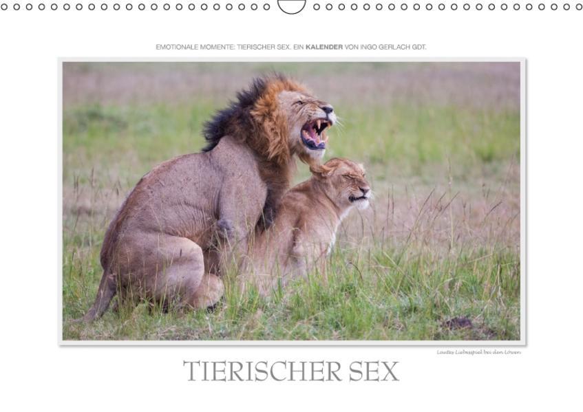 Emotionale Momente: Tierischer Sex. / CH-Version (Wandkalender 2017 DIN A3 quer) - Coverbild