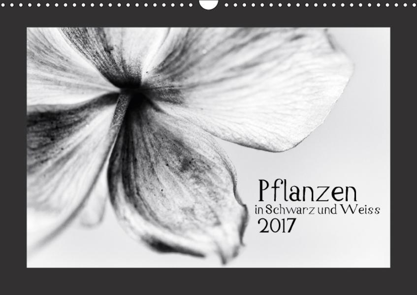 Pflanzen in Schwarz und Weiss / CH-Version (Wandkalender 2017 DIN A3 quer) - Coverbild