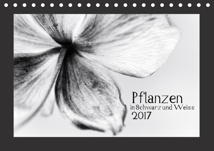 Pflanzen in Schwarz und Weiss / CH-Version (Tischkalender 2017 DIN A5 quer) - Coverbild