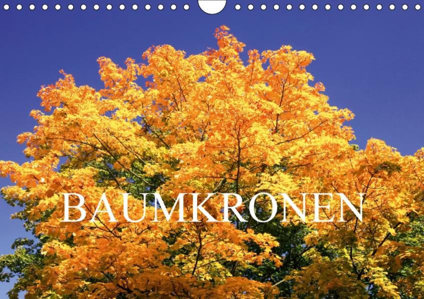 Baumkronen (Wandkalender 2017 DIN A4 quer) - Coverbild