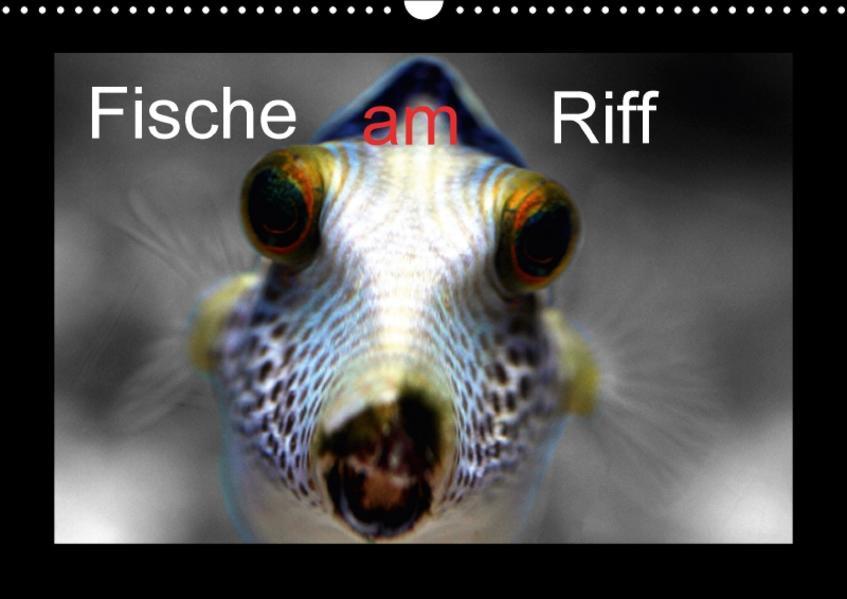 Fische am Riff (Wandkalender 2017 DIN A3 quer) - Coverbild