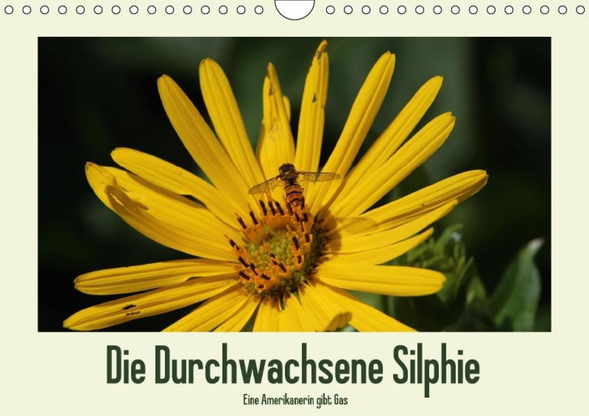Die Durchwachsene Silphie - Eine Amerikanerin gibt Gas / CH-Version (Wandkalender 2017 DIN A4 quer) - Coverbild